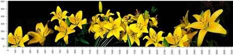 арт.№197 (skin_flora 560 )