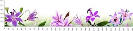 арт.№198 (skin_flora 561 )