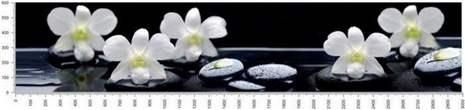 арт.№291 (skin-flora 24)