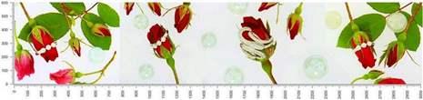 арт.№342 (skin-flora 88)
