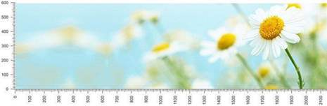 арт.№384 (skin-flora 148)