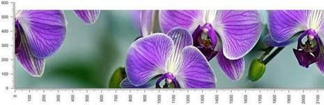 арт.№431 (skin-flora 231)