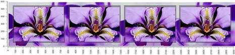 арт.№434 (skin-flora 239)