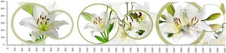 арт.№438 (skin-flora 246)