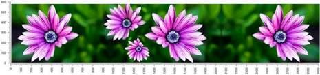 арт.№447 (skin-flora 264)