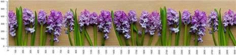 арт.№473 (skin-flora 308)