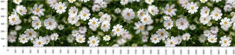 арт.№476 (skin-flora 311)
