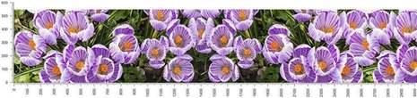 арт.№480 (skin-flora 318)