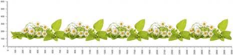 арт.№487 (skin-flora 327)