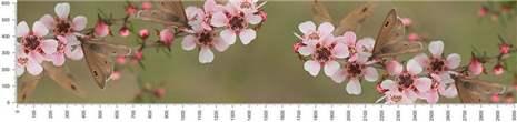 арт.№517 (skin-flora 357)