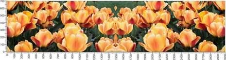 арт.№540 (Цветы 17)