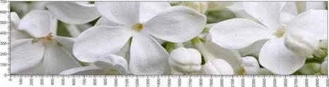 арт.№570 (Цветы 47)