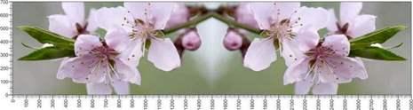 арт.№571 (Цветы 48)
