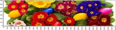 арт.№573 (Цветы 50)