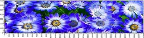 арт.№576 (Цветы 53)