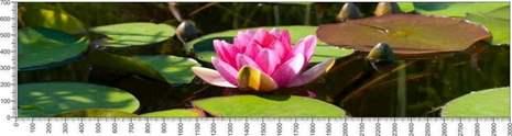 арт.№577 (Цветы 54)