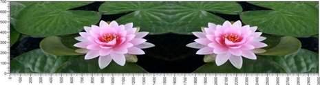 арт.№578 (Цветы 55)
