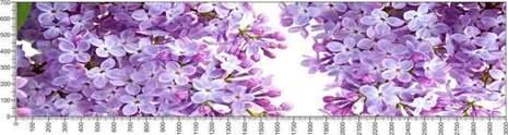 арт.№583 (Цветы 60)