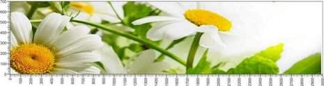 арт.№595 (Цветы 72)