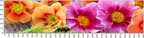 арт.№602 (Цветы 79)
