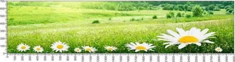 арт.№604 (Цветы 81)