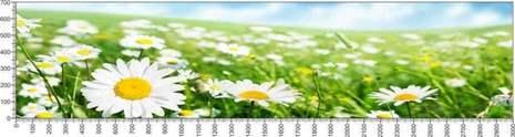 арт.№613 (Цветы 90)