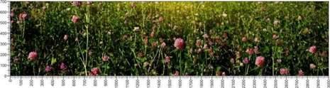 арт.№621 (Цветы 98)