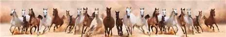 арт.№ 267  (Фотофартук- Fauna horses 10)