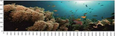 арт.№013 (Подводный мир 13)