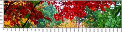 арт.№416 (Панорамы природы 10)